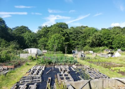 Theydon Bois Allotments